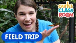 Visit A Butterfly Conservatory!