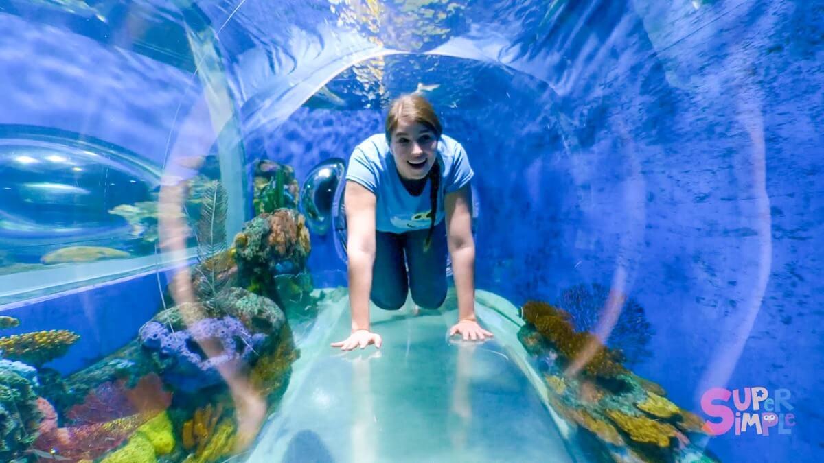 Underwater Animal Adventure