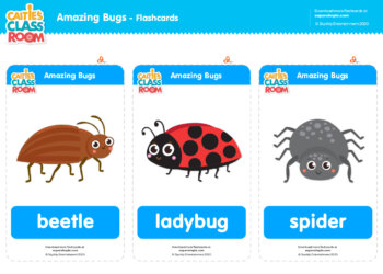 Caitie's Classroom Amazing Bugs Flashcards