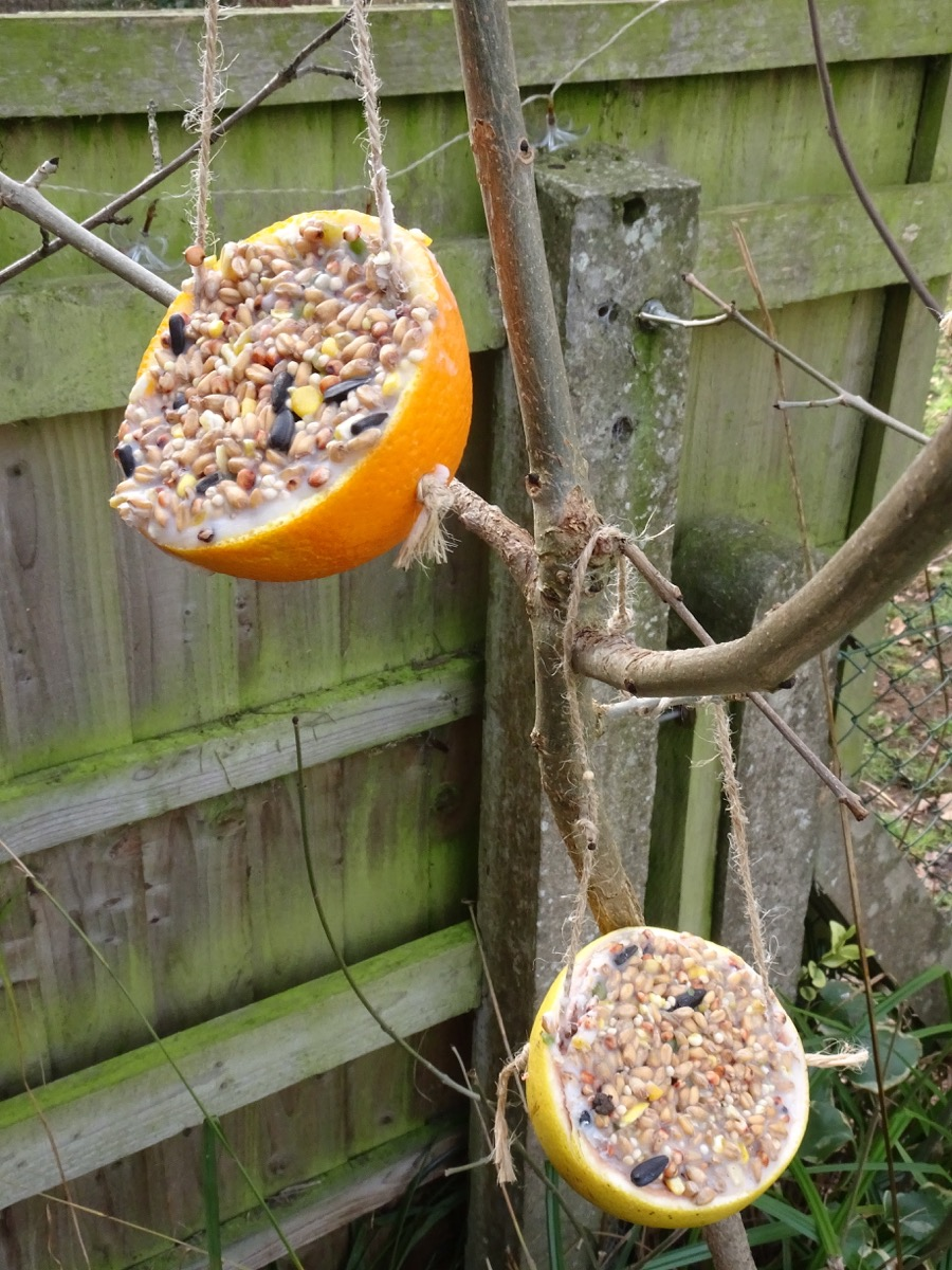 Finished Bird Feeders