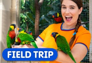 Field Trip to the Bird Kingdom