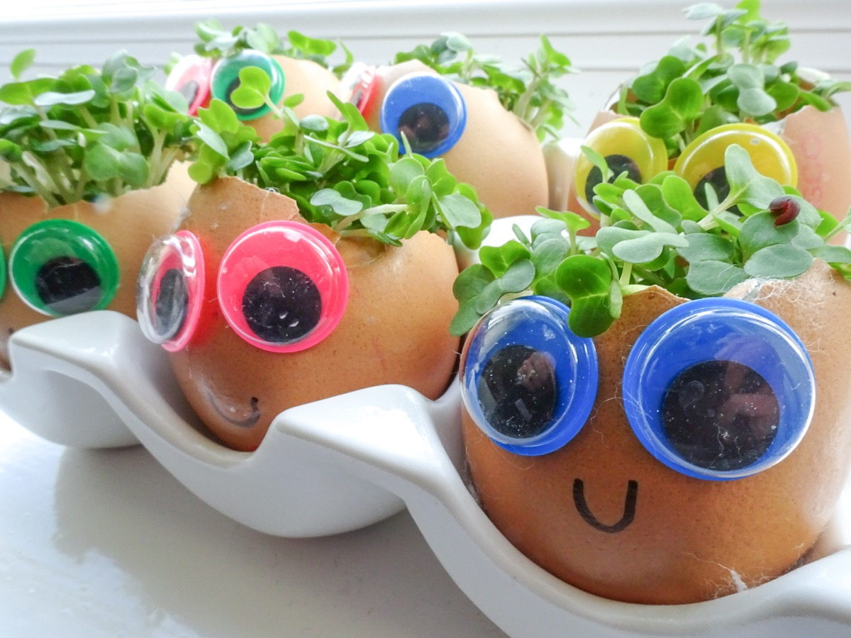 Googly Eye Egg Heads