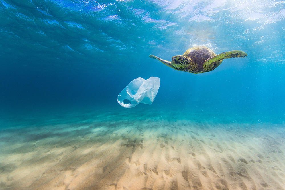 Image result for turtles plastic ba