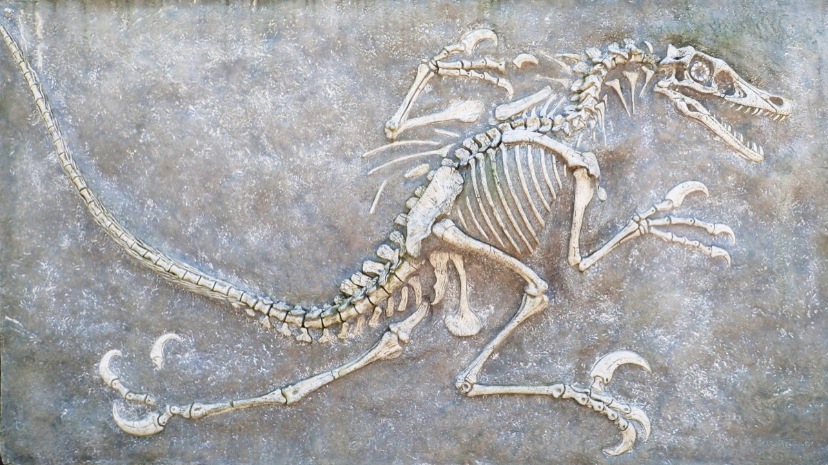 Dinosaurs Discoveries