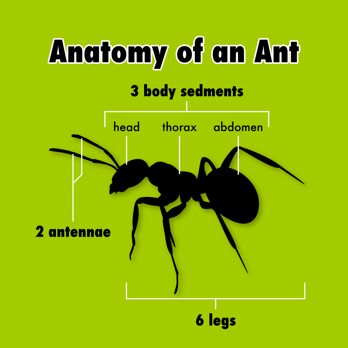the power of ants