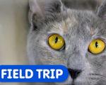 Humane Society Field Trip
