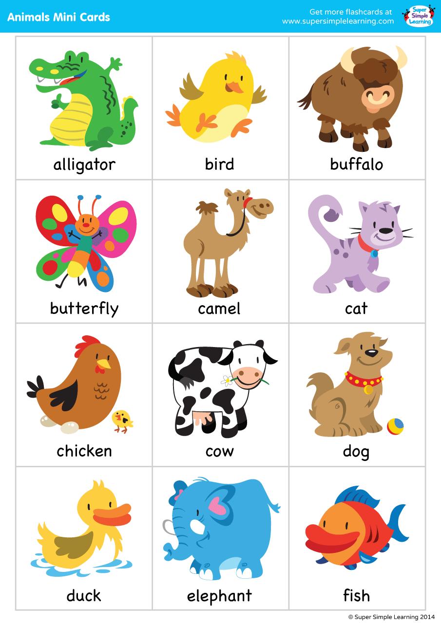 Super Simple Songs Animals Mini Cards Super Simple